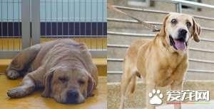 狗狗失明遭弃养 侠医空运水晶体帮它动手术治疗